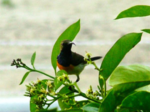 There are at least 19 endemic birds on Palawan