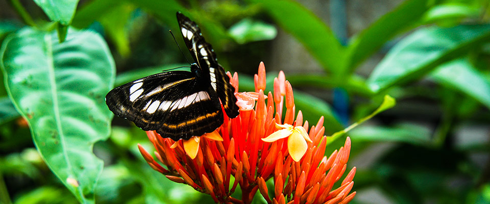 Palawan has about 450 species of butterflies.